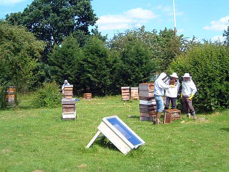 hampton_court_apiary_1