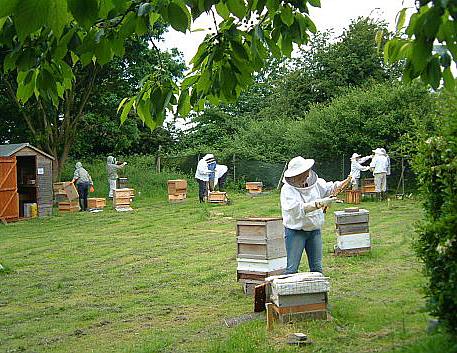 hampton_court_apiary_2